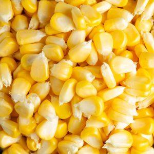 Grãos de milho amarelo